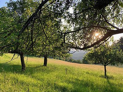 Wiese im Odenwald